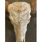 Skull Longhoorn Bali 160 cm