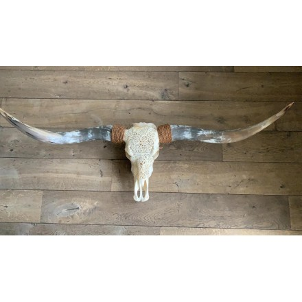 Longhoorn skull gegraveerd echt 160 cm