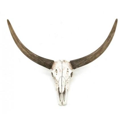 Buffel Schedel skull groot