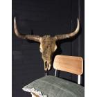 Buffel Schedel bewerkt groot