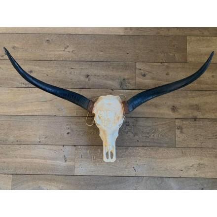 Longhorn skull 1 meter