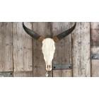 Argentijnse stier 65 cm