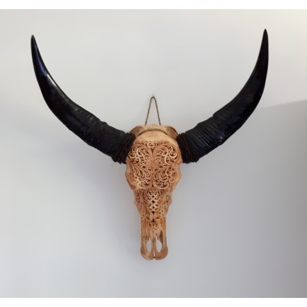 Buffel schedel skull Bali - Lotus bruin