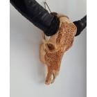 Buffel schedel skull Bali - Weys bruin
