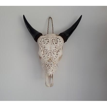 Buffel schedel skull Bali - Koe schedel
