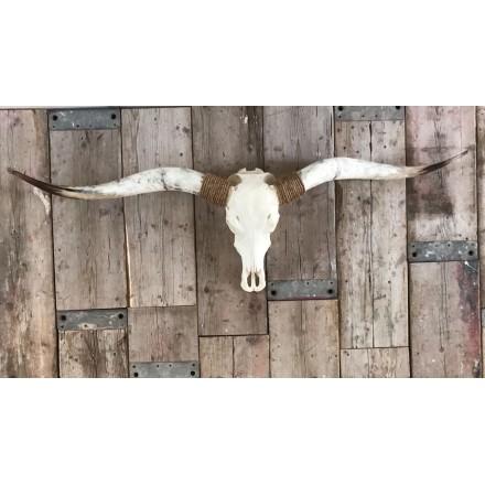 Longhorn skull met wit XL