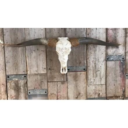 Longhoorn skull met grote hoorns XL