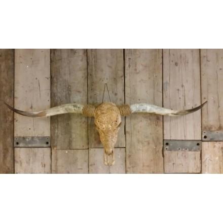 Bruine longhoorn skull gegraveerd