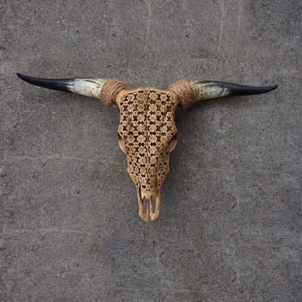 Bull schedel skull