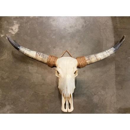 Skull gebleekt echt 110-130 cm