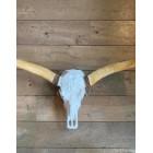 Longhorn skull 1 meter wit met bruin