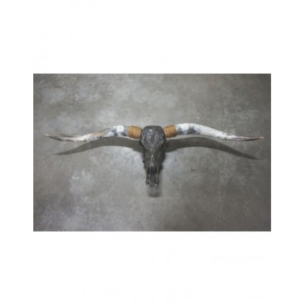 Longhoorn gegraveerd echt antraciet 1