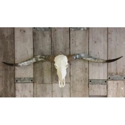 Longhoorn skull niet gegraveerd