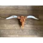 Longhoorn skull cognac 160 cm
