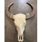 Skull echt buffel bruine hoorns