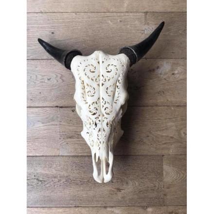 Skull Zebu