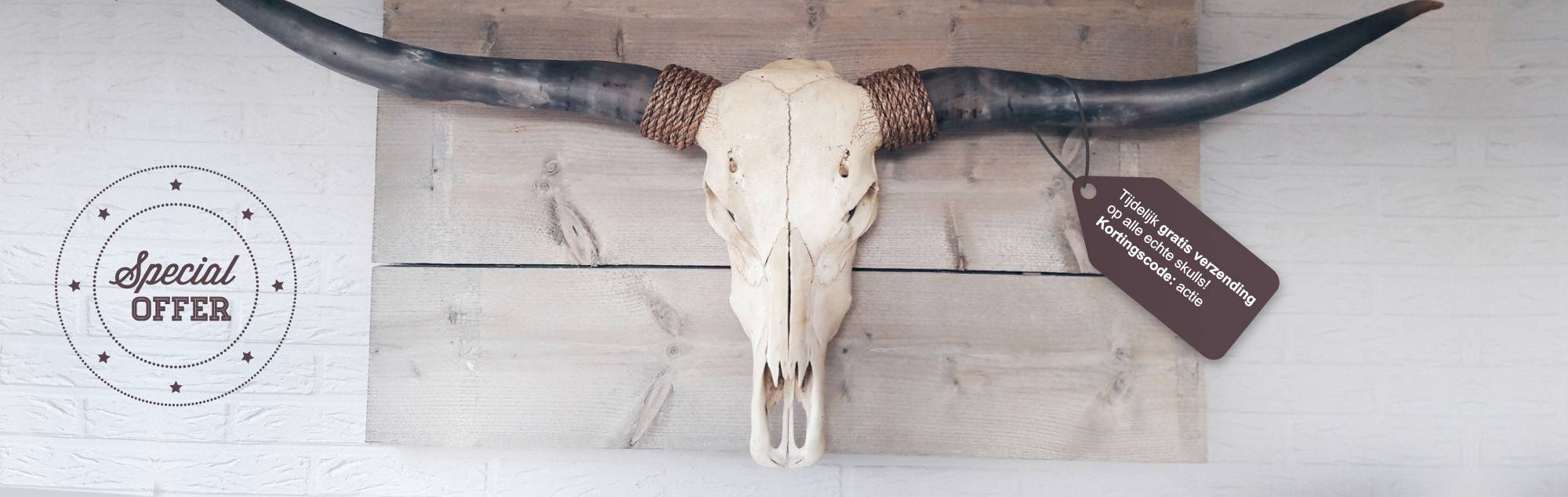 Skull Decoratie Skull Kopen Prachtige Buffel Schedels Waaronder Longhorns Skulls En Buffelschedels Voor Aan De Muur