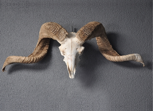 Skulls echt