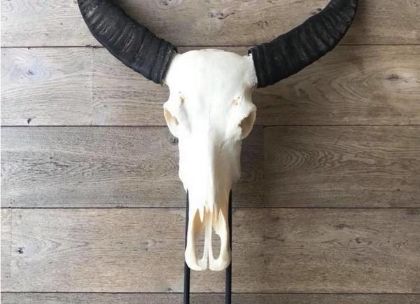 Skulls op standaard